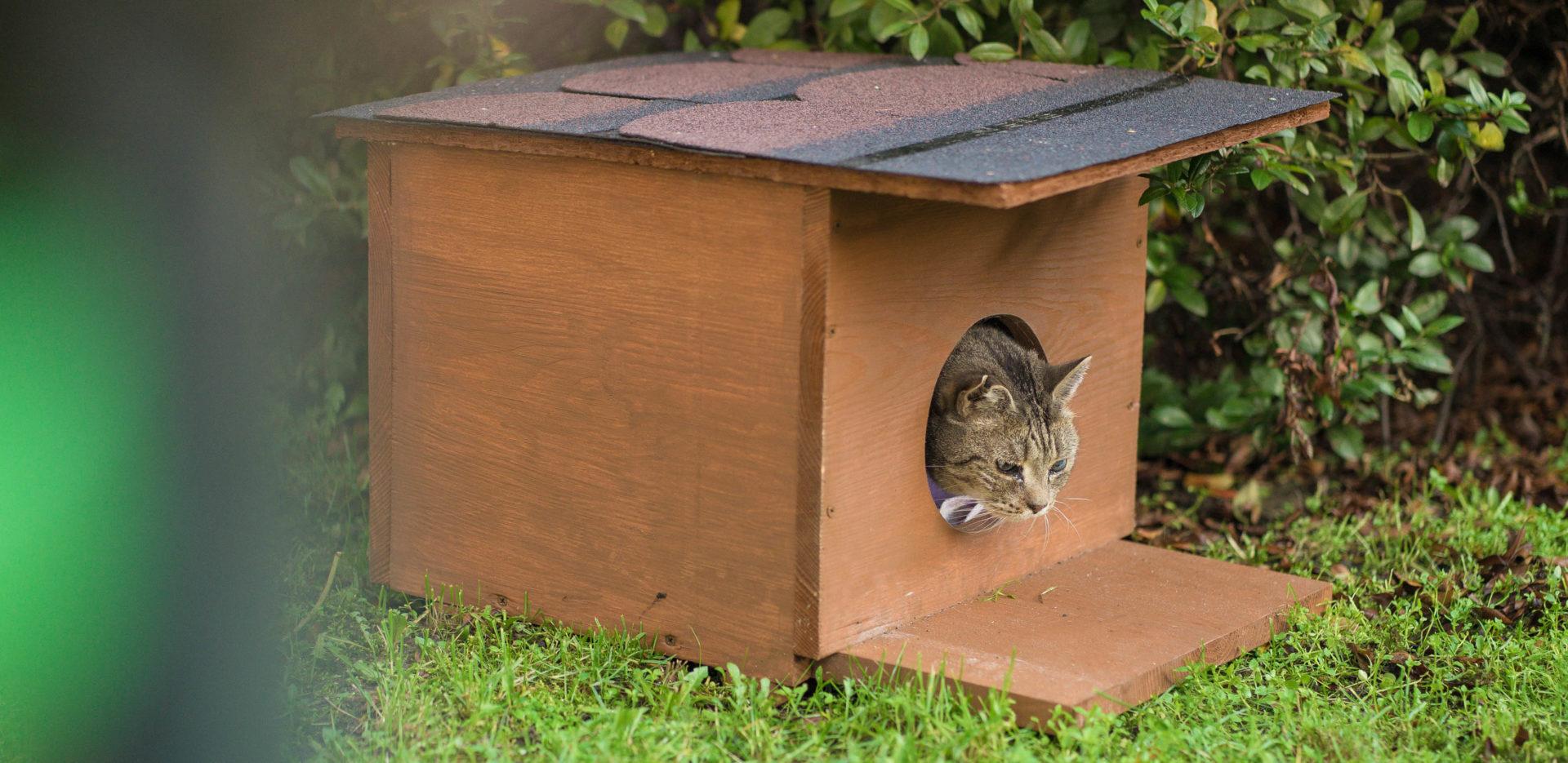 Kot w budce