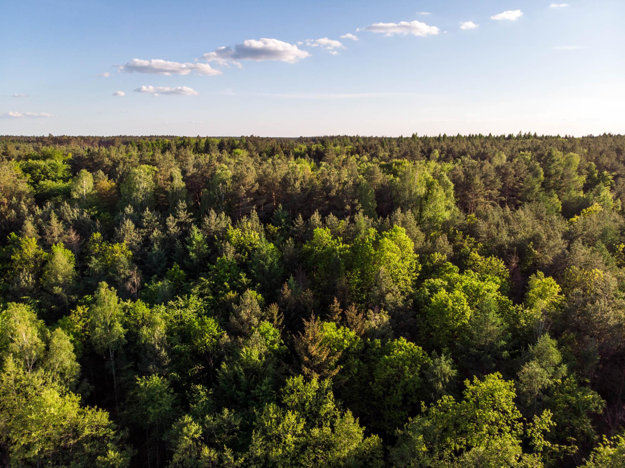 Lasy w okolicach Buszowa