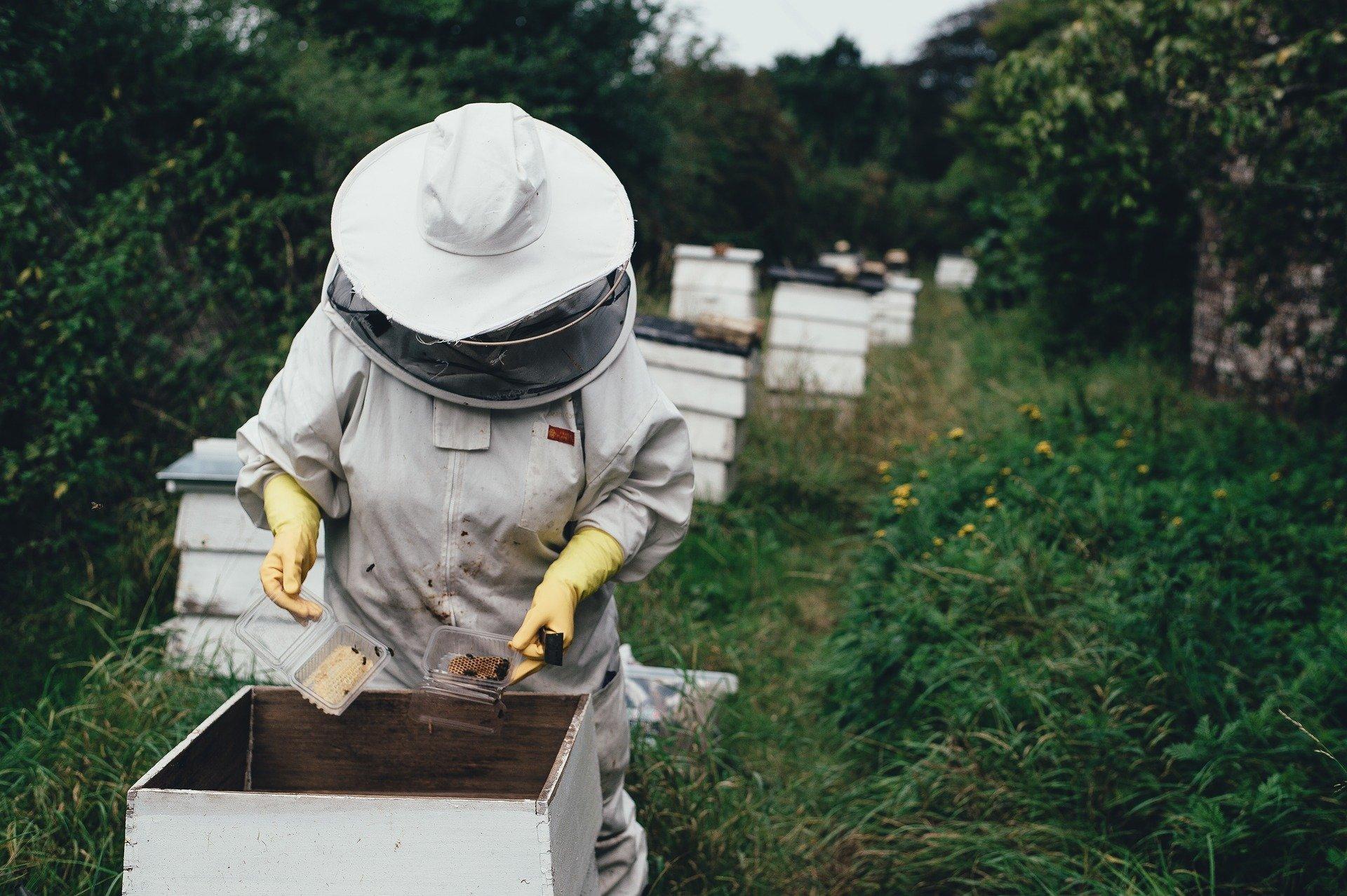 Pszczelarz podczas pracy